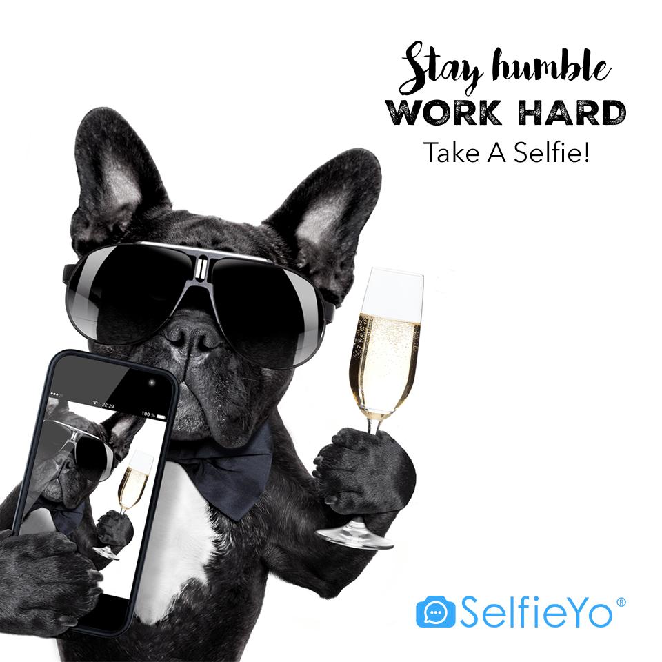 Cão Selfie
